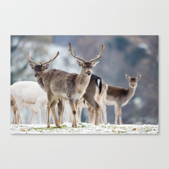 FALLOW DEER ON SNOWY GROUND Canvas Print