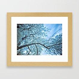 Infra Red Tree Branch Framed Art Print