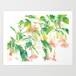 Brugmansia Delicate Floral Watercolor Trumpet Flower Painting Art Print