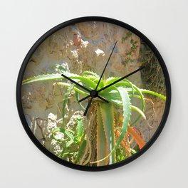 Aloe Plant Wall Clock