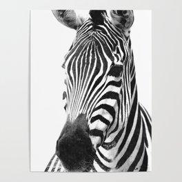 Black and white zebra illustration Poster