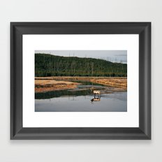 Bull Elk Crossing a River in Yellowstone Framed Art Print