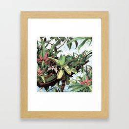 Ring tailed Coati Framed Art Print