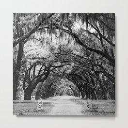 Spanish Moss on Southern Live Oak Trees black and white photograph / black and white art photography Metal Print