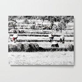 Rice field Metal Print