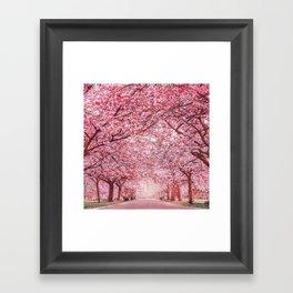 Cherry Blossom in Greenwich Park Framed Art Print