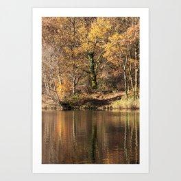 Golden Pond - 2 Art Print