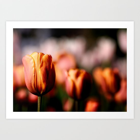 Colorful spring tulips Art Print