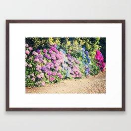 Hydrangea Lane Framed Art Print