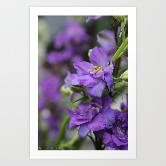 Purple Larkspur Art Print