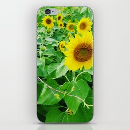 Bright suns iPhone Skin