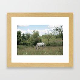 Summer Meadow XIII Framed Art Print