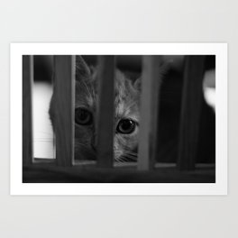 Who Lurks Under The Table? Art Print