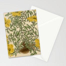 Linum elegans 144 8769 Stationery Cards