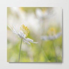 White Wood Anemone Flower in Forest Bokeh Background #decor #society6 #buyart Metal Print
