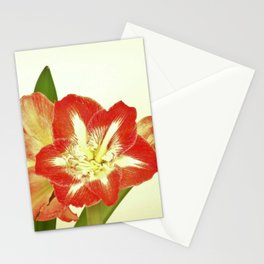 Minerva 2 Stationery Cards