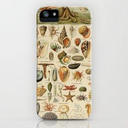 Vintage sealife and seashell illustration iPhone Case