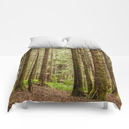 Old Growth Forest Photography Print Comforters