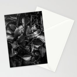 closeup leaves texture background in black and white Stationery Cards