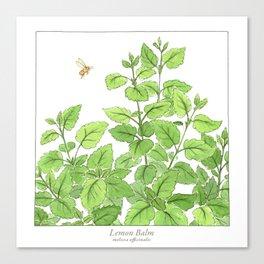 Lemon Balm Canvas Print