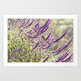 hummingbird + flowers Art Print