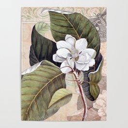 Vintage White Magnolia Poster