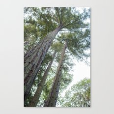 It's all Looking Up Canvas Print