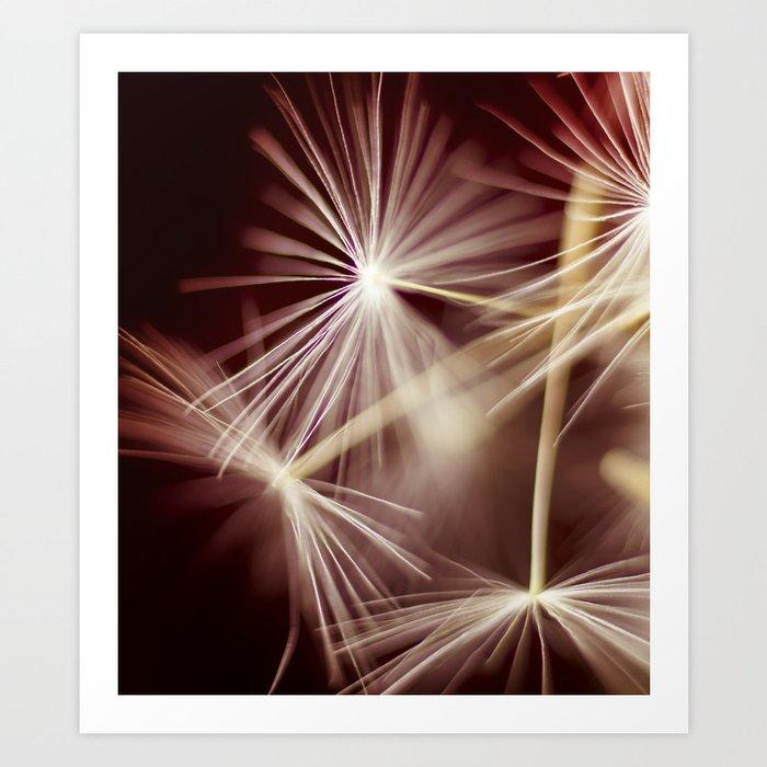 dandelion brown Art Print