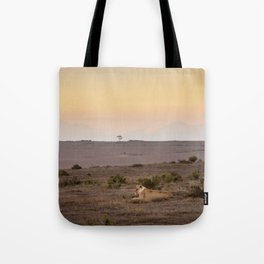 Single lioness relaxes while African sun sets Tote Bag