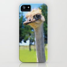 What! I AM AN OSTRICH so What! iPhone (5, 5s) Slim Case