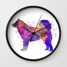 Alaskan Malamute 01 in watercolor Wall Clock
