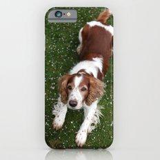 Welsh Springer Spaniel - Scott iPhone 6s Slim Case