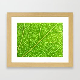 Green Leaf Veins 04 Framed Art Print
