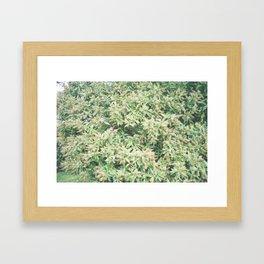 P_08 Framed Art Print