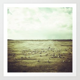 Field of sheep Art Print