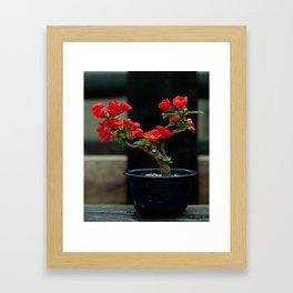 BEAUTIFUL CAMELIA BONSAI Framed Art Print