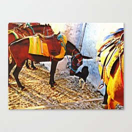 Donkey and dog 2 Canvas Print