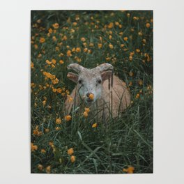Sheep Lying in Flowers Poster