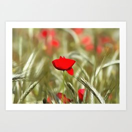 Hot Poppy Art Print