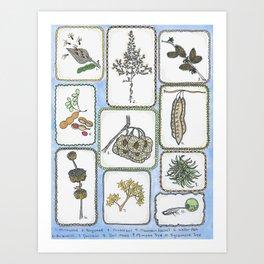 Winter Curiosities Art Print