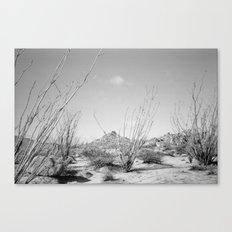 California Ocotillo Canvas Print