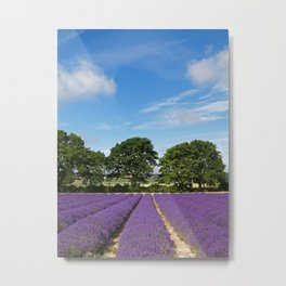 Lavender field near Selborne in Hampshire Metal Print