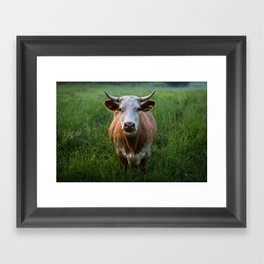 COW - FIELD - GREEN - VALLEY - NATURE - PHOTOGRAPHY - LANDSCAPE Framed Art Print