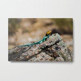 Collard Lizard Metal Print
