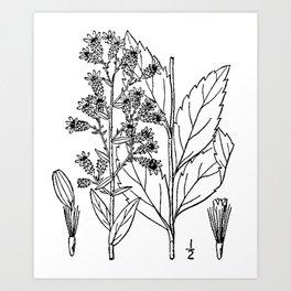 Botanical Scientific Illustration Black and White Art Print