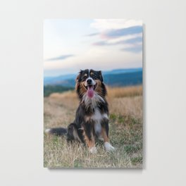 Australian Sheep Dog Metal Print