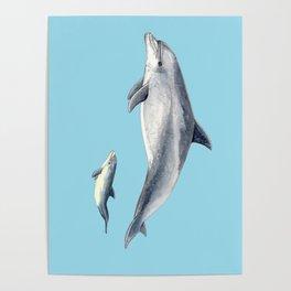 Blue Bottlenose dolphin Poster
