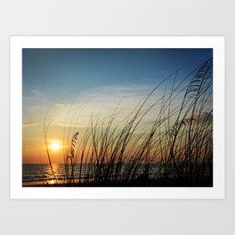 Sunset through the sea weeds Art Print