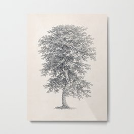 Tree Sketch 21 - Hickory Metal Print