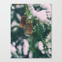 Frosty Pine Cones Evergreen Tree (Color) Canvas Print